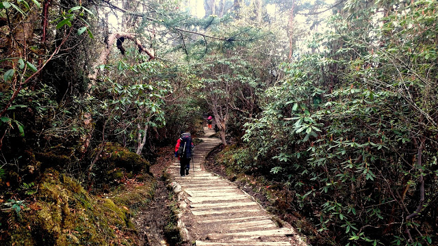Wooden trail to Dzongri