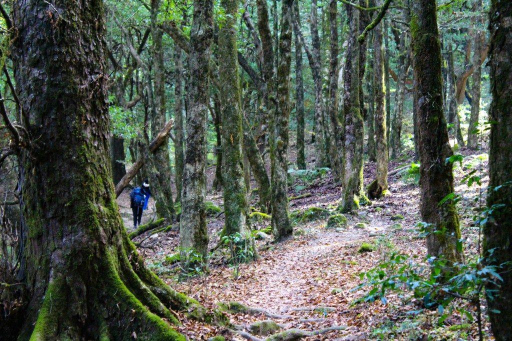 Approaching towards Rohini Bugyal - Deoriatal Chandrashila Trek