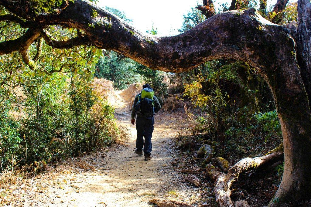 Trek through the forest - Deoriatal Chandrashila Trek