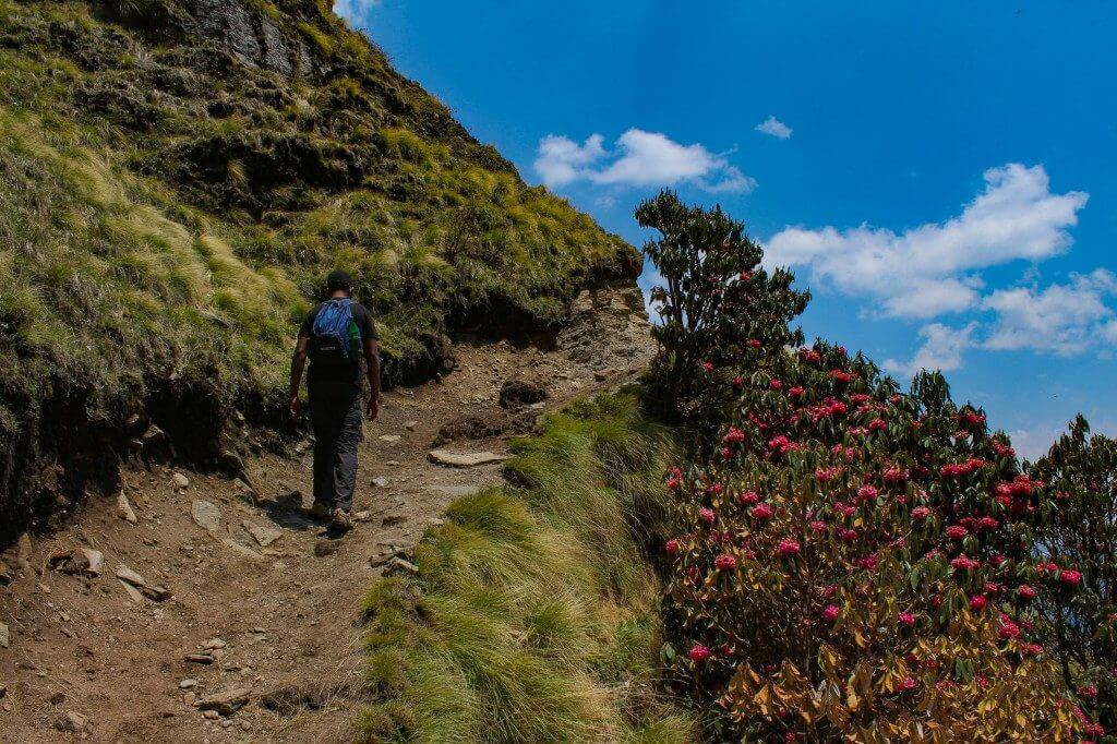 About to reach the bugyal - Pangarchulla Peak