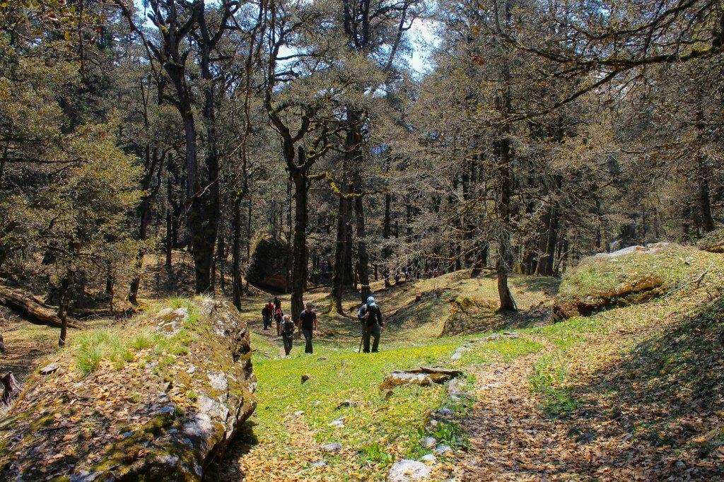 Reaching the Tali Campsite - Pangarchulla Peak