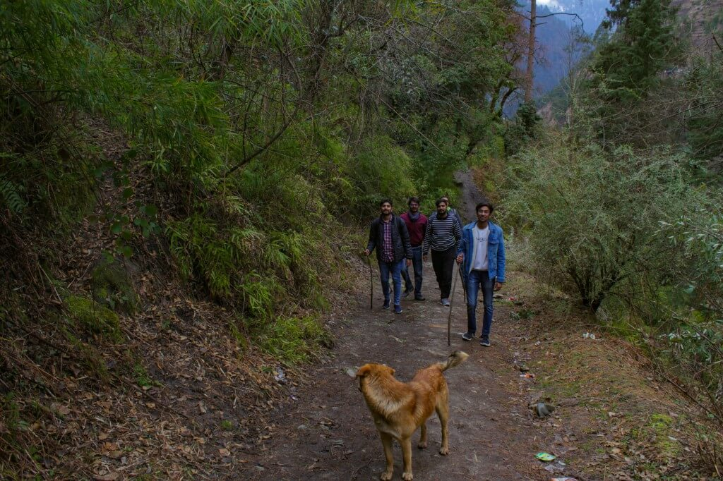 a dog accompanied us on the Rolla trek