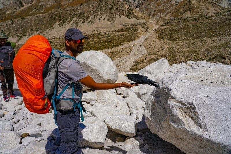 Feeding the alpine birds - Gaumukh Tapovan Trek